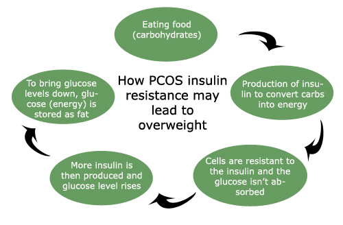 Insulin production cycle with PCOS.